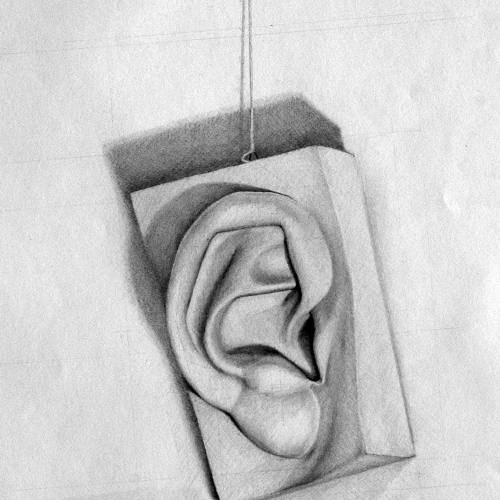 Drawing Course drawing of a ear