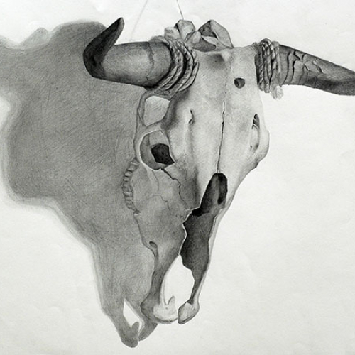 Drawing Course drawing of a cow